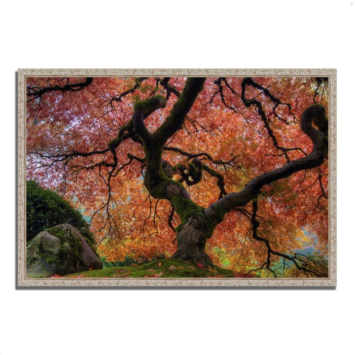 Fine Art Giclee Print on Gallery Wrap Canvas 32 In. x 47 In. Japanese Maple in Autumn Multi Color