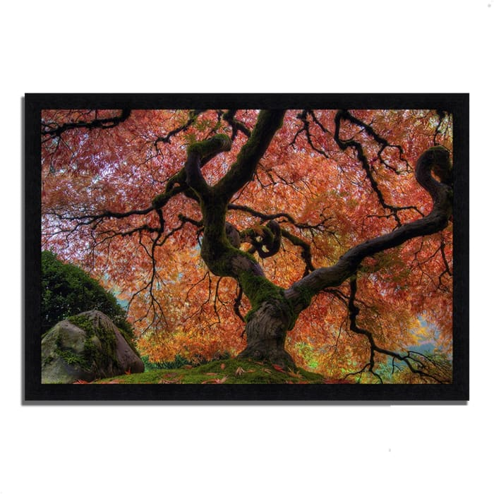 Framed Photograph Print 41 In. x 60 In. Japanese Maple in Autumn Multi Color