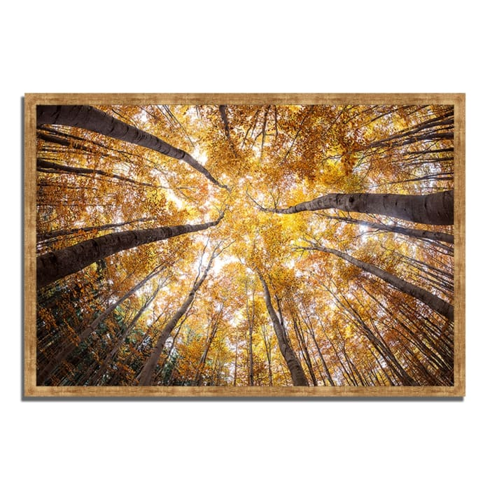 Framed Photograph Print 59 In. x 40 In. Reach For The Sky Multi Color
