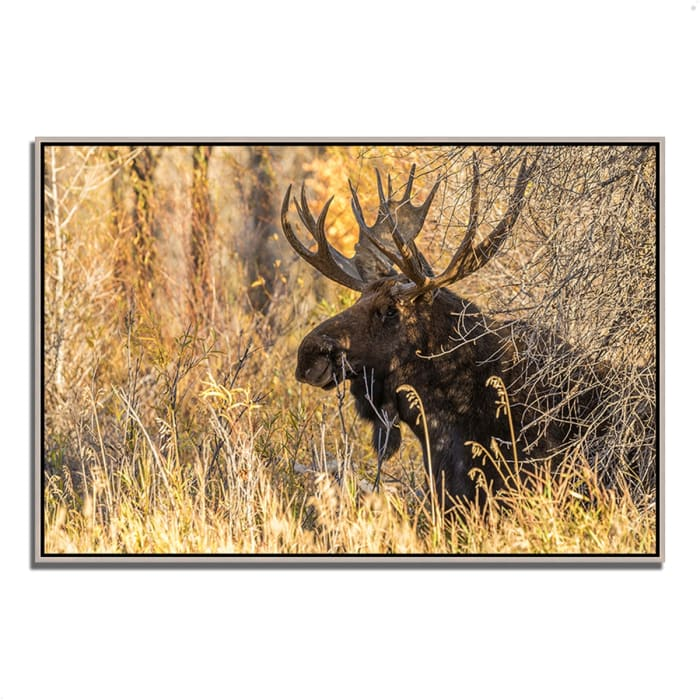 Fine Art Giclee Print on Gallery Wrap Canvas 32 In. x 22 In. Black Antler Moose Multi Color