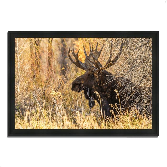 Framed Photograph Print 39 In. x 27 In. Black Antler Moose Multi Color
