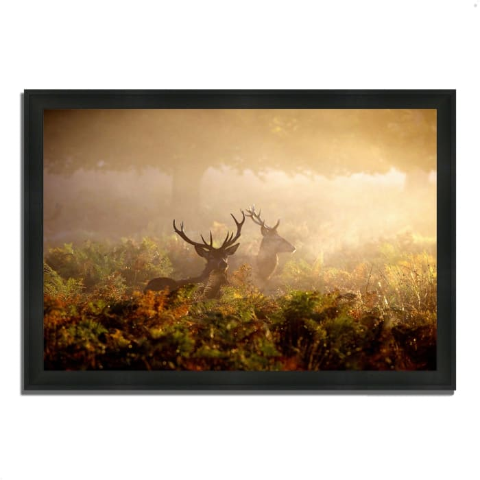 Framed Photograph Print 39 In. x 27 In. Two Stags at Dawn Multi Color