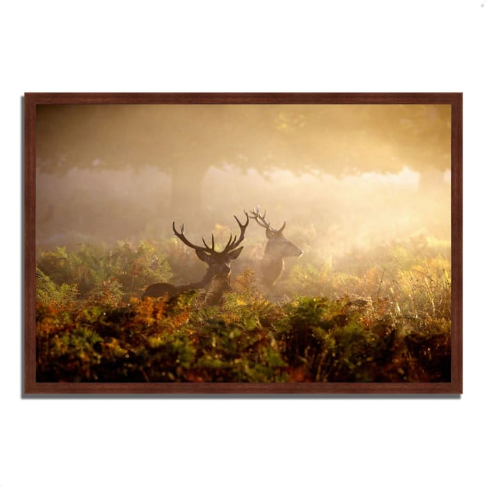 Framed Photograph Print 38 In. x 26 In. Two Stags at Dawn Multi Color