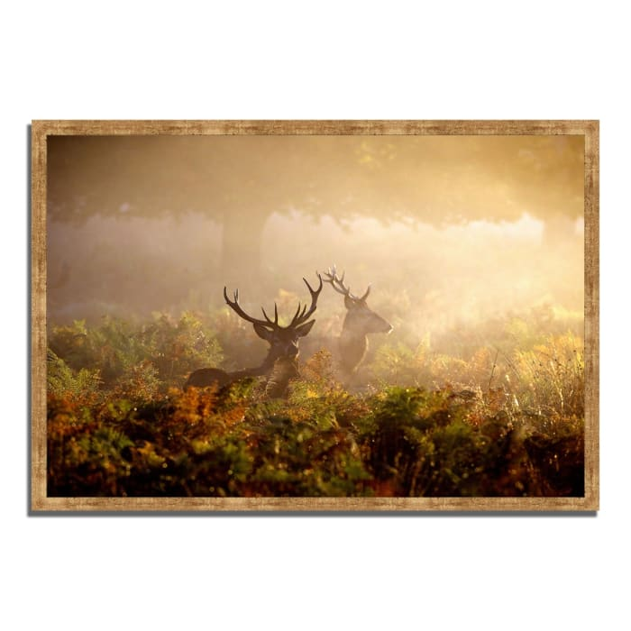 Framed Photograph Print 47 In. x 32 In. Two Stags at Dawn Multi Color