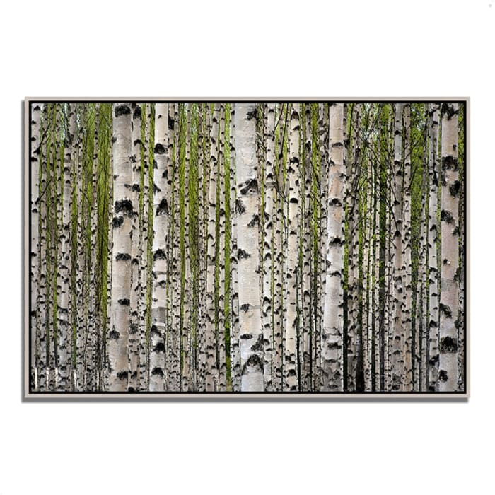 Fine Art Giclee Print on Gallery Wrap Canvas 32 In. x 22 In. Spring Birch Multi Color
