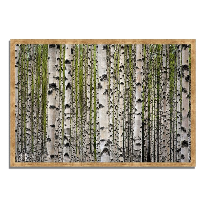 Framed Photograph Print 59 In. x 40 In. Spring Birch Multi Color