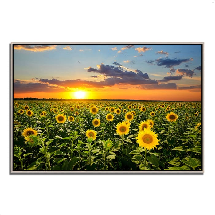 Fine Art Giclee Print on Gallery Wrap Canvas 59 In. x 40 In. Sunflower Sunset Multi Color