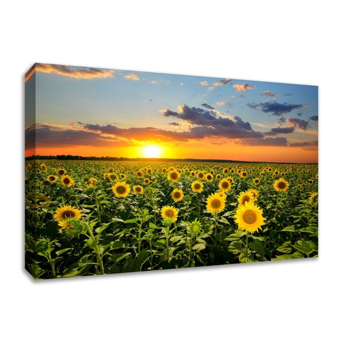 Fine Art Giclee Print on Gallery Wrap Canvas 36 In. x 24 In. Sunflower Sunset Multi Color