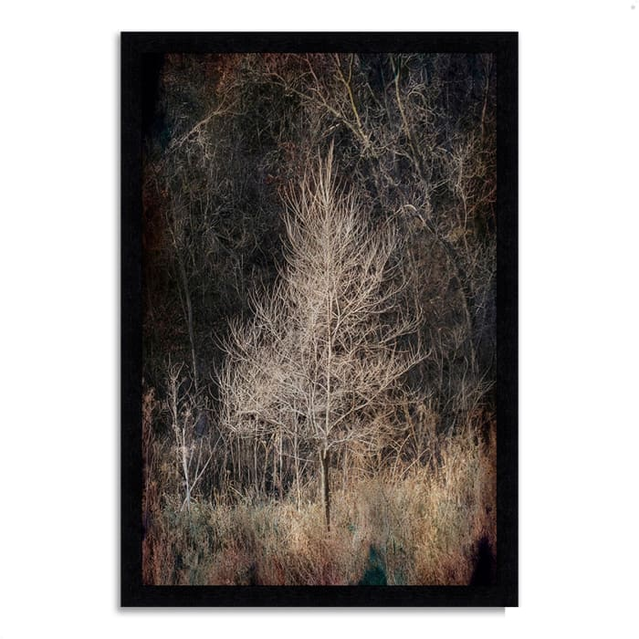 Framed Photograph Print 27 In. x 39 In. Illumination Multi Color