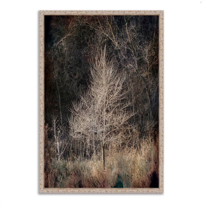 Fine Art Giclee Print on Gallery Wrap Canvas 22 In. x 32 In. Illumination Multi Color