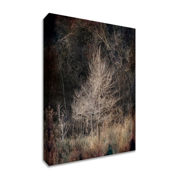 Fine Art Giclee Print on Gallery Wrap Canvas 20 In. x 30 In. Illumination Multi Color