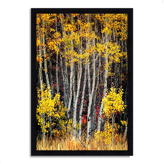 Framed Photograph Print 23 In. x 33 In. In The Aspens Multi Color