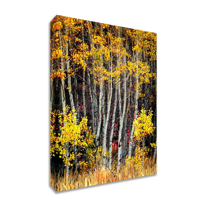 Fine Art Giclee Print on Gallery Wrap Canvas 20 In. x 30 In. In The Aspens Multi Color