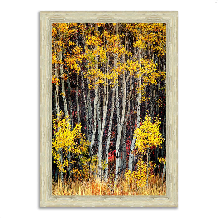 Framed Photograph Print 26 In. x 36 In. In The Aspens Multi Color