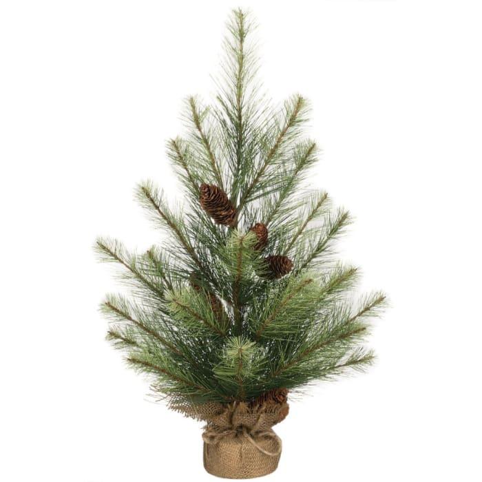 Black Hills Pine Tree