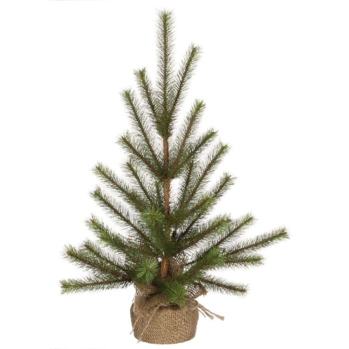 Slim Needle Pine Tree