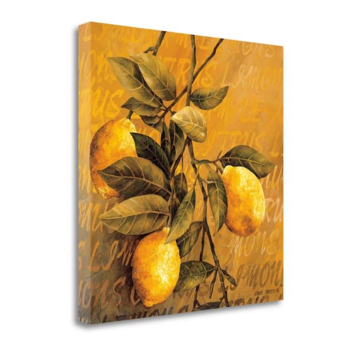 Lemon Branch By Linda Thompson 22  x 22 Gallery Wrap Canvas