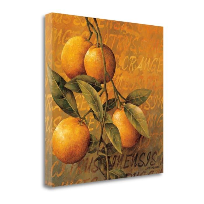 Orange Branch By Linda Thompson 22 x 22 Gallery Wrap Canvas