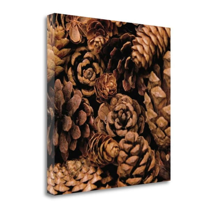 Cone Harvest By Jeff 22 x 22 Gallery Wrap Canvas