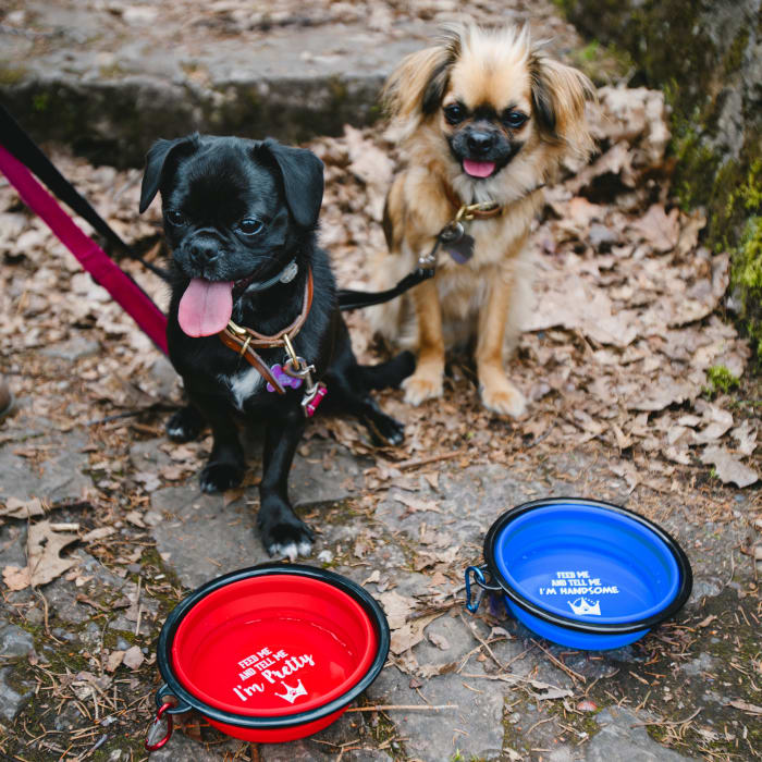 Feed Me and Tell Me I'm Pretty Collapsible Silicone Pet Bowl