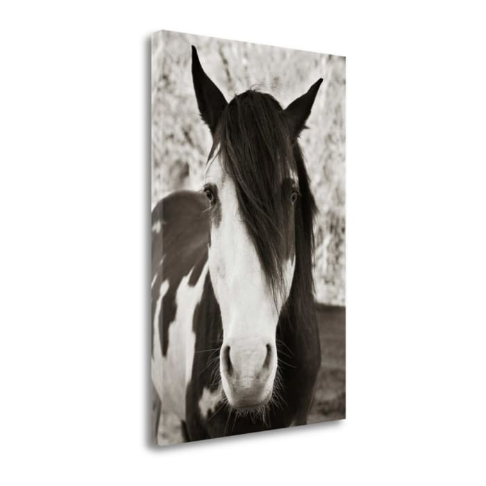Pale Eyed Stallion By Traer Scott Wrapped Canvas Wall Art