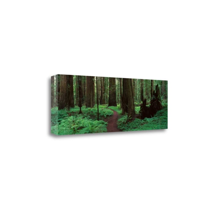 Redwoods Path By Alain Thomas Wrapped Canvas Wall Art