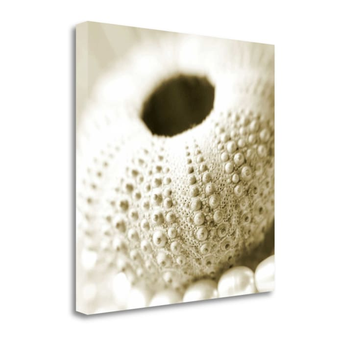 Shells And Pearls 2 By Photoinc Studio Wrapped Canvas Wall Art