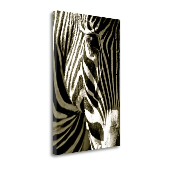 Zebra Head By Courtney Lawhorn Wrapped Canvas Wall Art