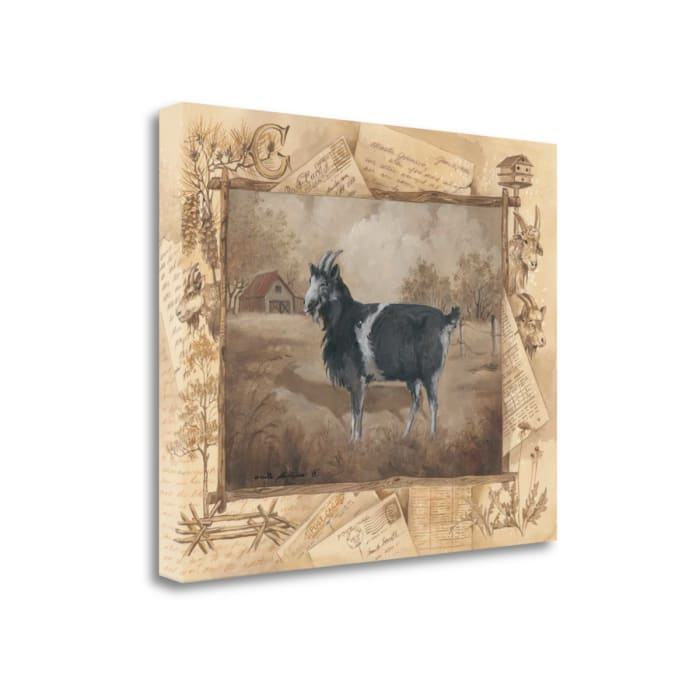 Goat By Anita Phillips Wrapped Canvas Wall Art