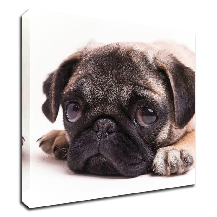 Print on Wrapped Canvas Wall Art  Sad Sack Pug by Edward M. Fielding Multi Color