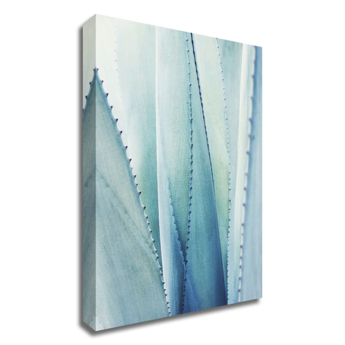Pale Blue Agave No. 1 by Lupen Grainne Wrapped Canvas Wall Art