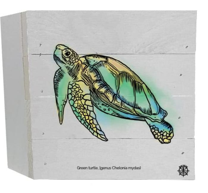 SEA TURTLE With SCIENTIFIC NAME Wall Accent