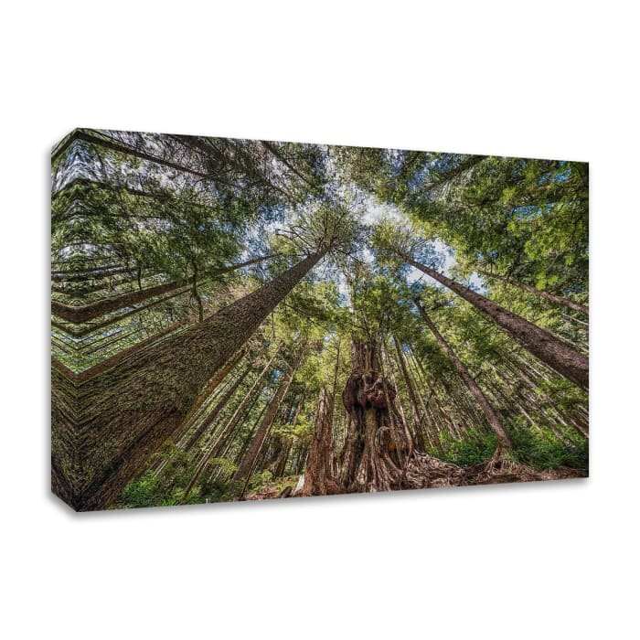 Avatar Grove Canopy by Tim Oldford Wrapped Canvas Wall Art