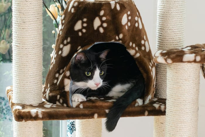 Cat Tree Hammock Bed with Natural Sisal Post for Cats and Kittens