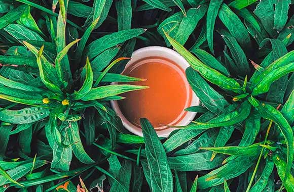 Kako čaj od konoplje utiče na nas