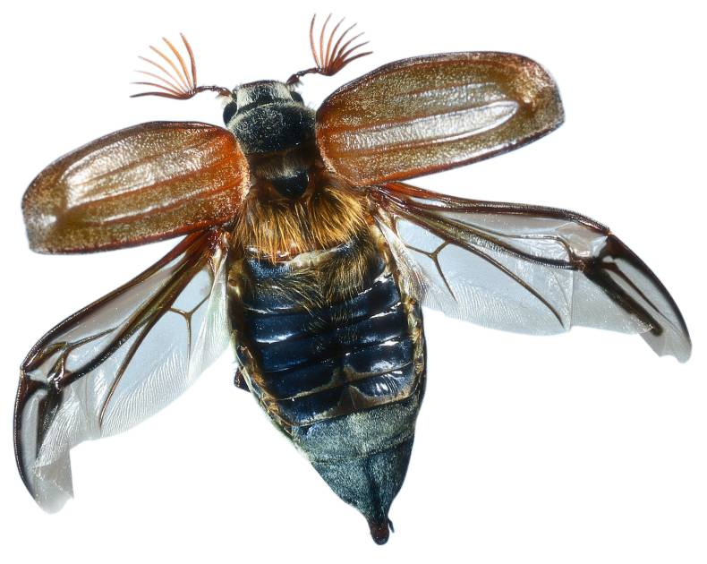 Flying Insects | Insect Wings | DK Find Out - photo#11