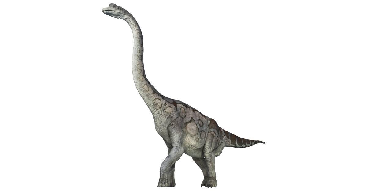 brachiosaurus brachiosaurus facts dk find out