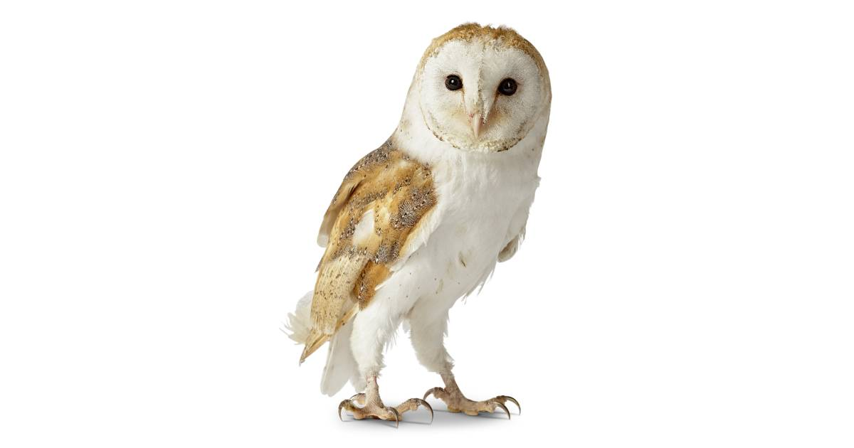 Owl Facts for Kids | Information About Owls | DK Find Out