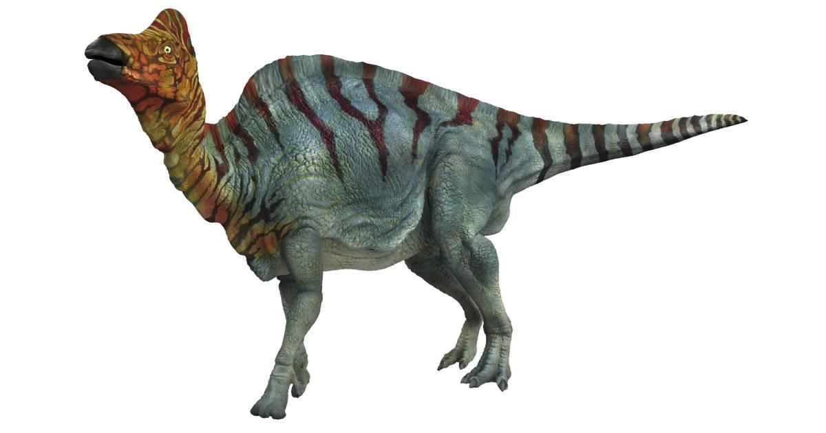Image result for corythosaurus