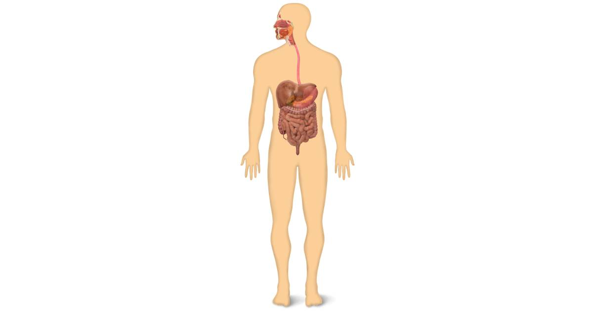 How Does the Digestive System Work for Kids | DK Find Out