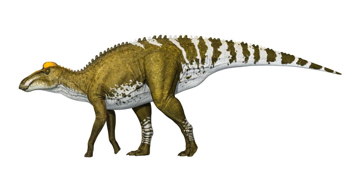 Image result for edmontosaurus