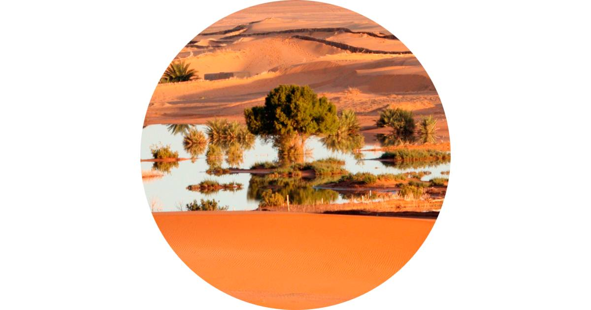 What Is An Oasis   How Are Oases Formed   DK Find Out