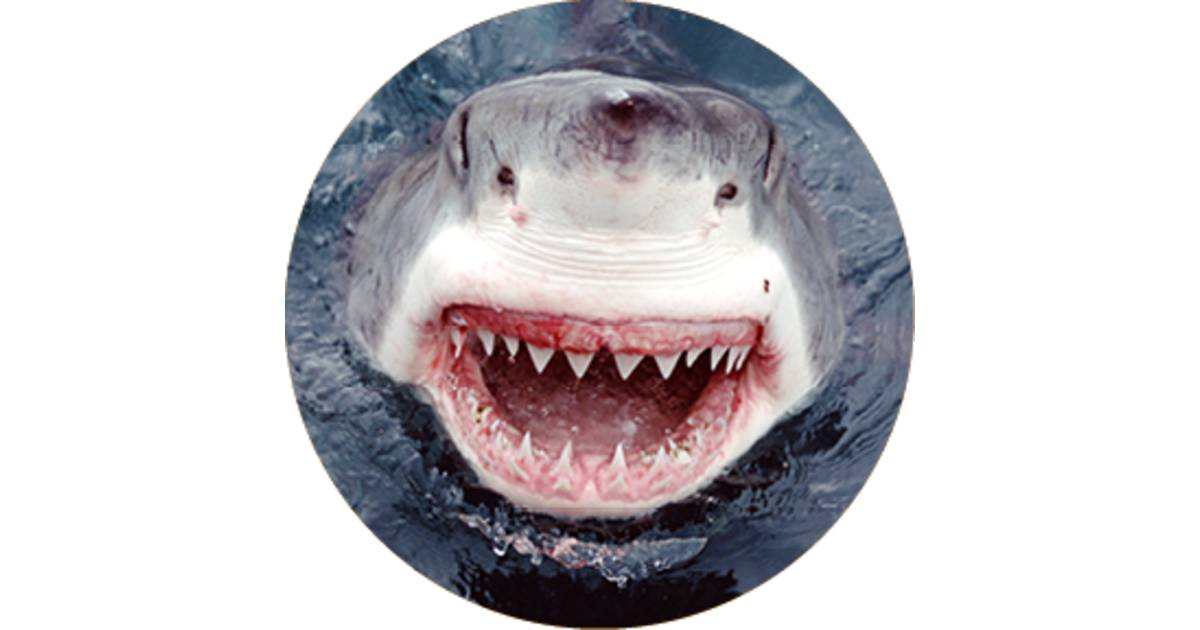 Shark Jaws | Facts About Sharks | DK Find Out