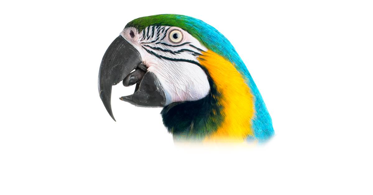 Bird Beaks | Different Types Of Beaks | DK Find Out