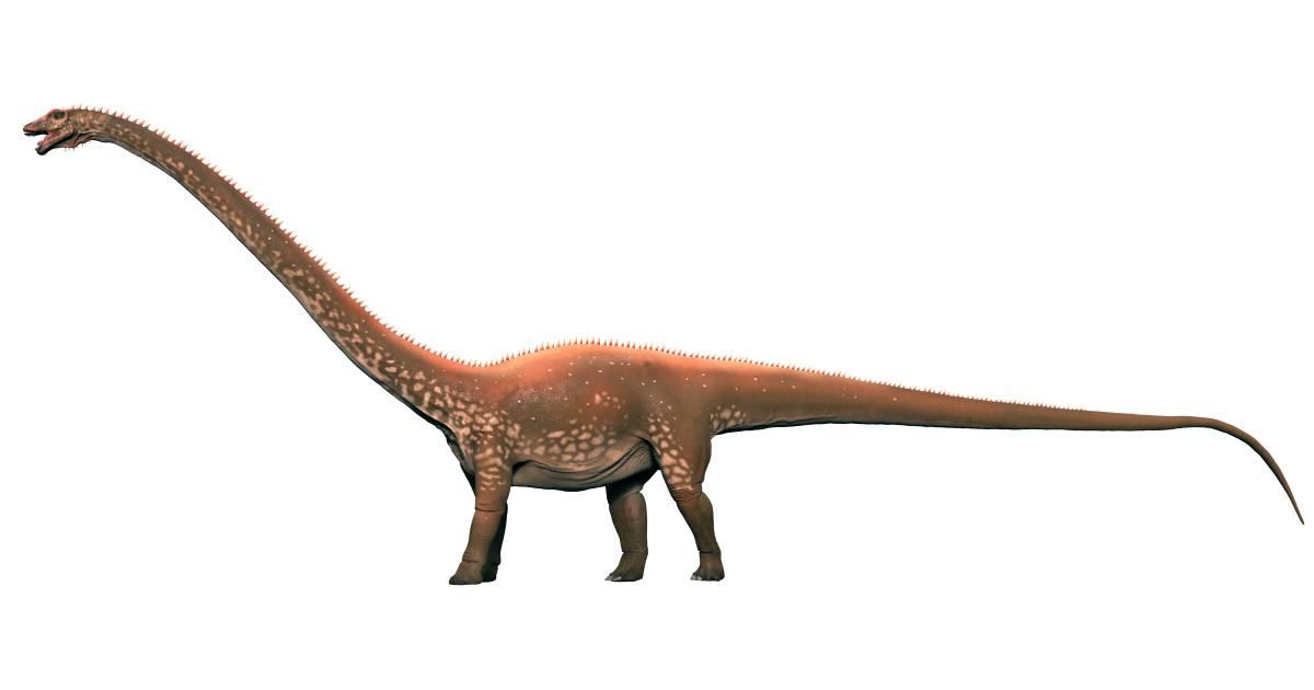 Diplodocus on Digestive System For Kids