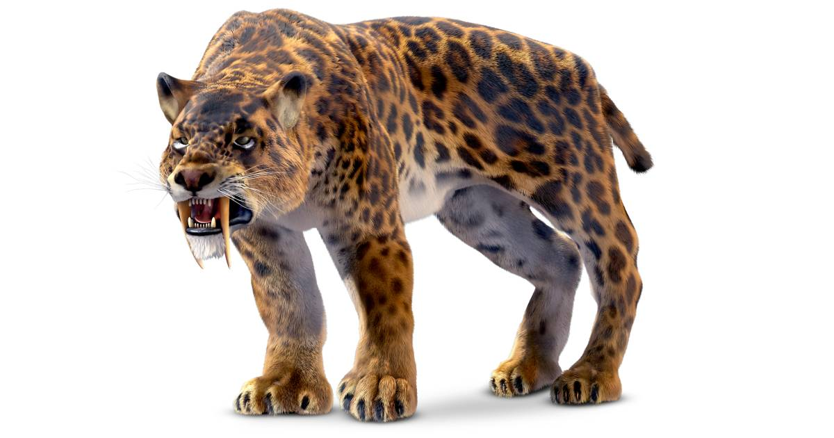 Prehistoric Animals Saber Tooth Cat
