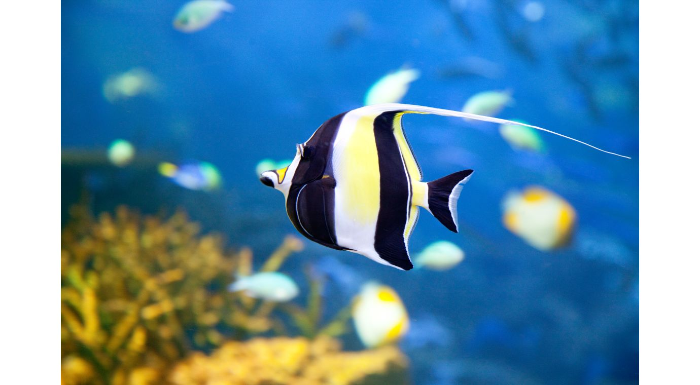 coral reef fish images