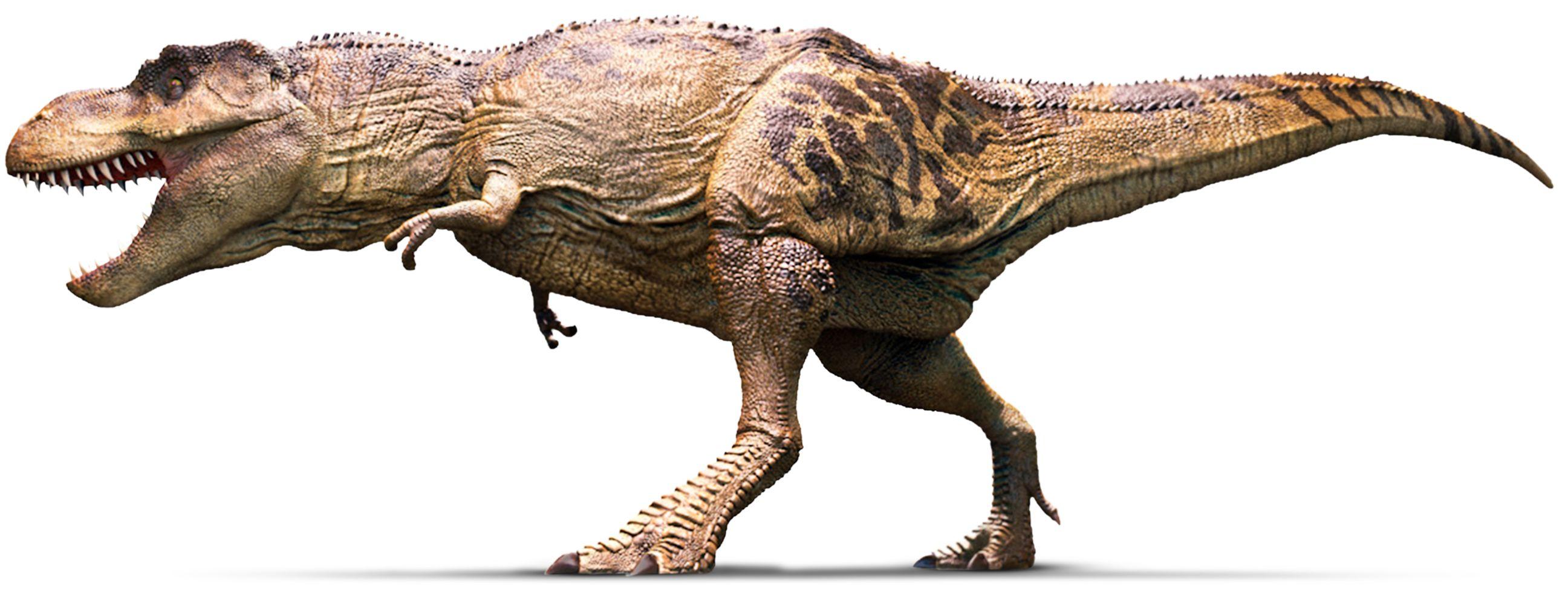 Tyrannosaurus tyrannosaurus rex facts dk find out for Tyranosaurus rex
