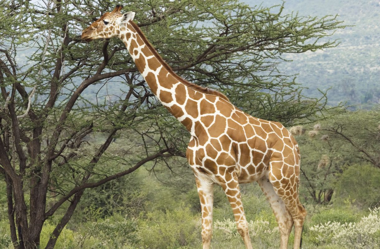 More herbivores images   Animals and Nature lessons   DK ...