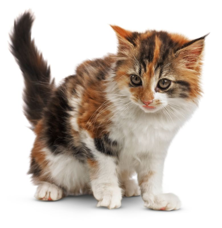 kittens images animals and nature lessons dk find out